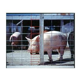 Red Brand Stockade Panel 34 Inch X 16 Ft Hog Panel 90215