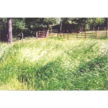 Schultz Orchard Grass Seed 50 Lb Bag