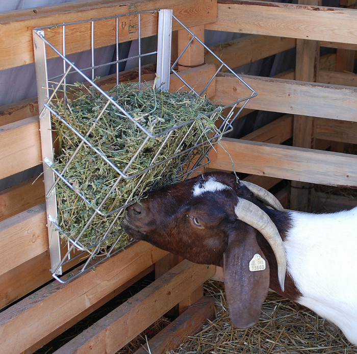 detail bale for feeder hay feeders goat ct round rack goats star buckets livestock b with north item
