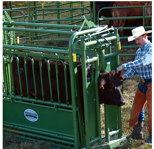 cow squeeze machine